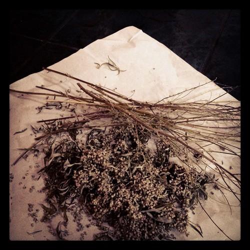 mugwort by Nature Morte