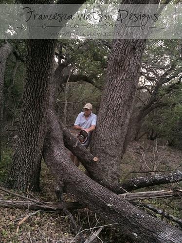 Cutting up an oak tree