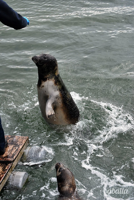 acuario_coruña_focas2