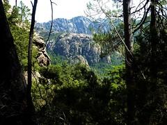 Remontée du haut-Velacu : dans la partie forestière, vue vers les escarpements de la crête Calanca Murata -  Paliri