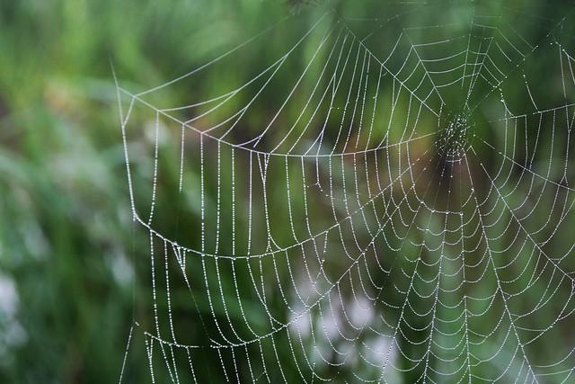 Spiderweb in Belgium