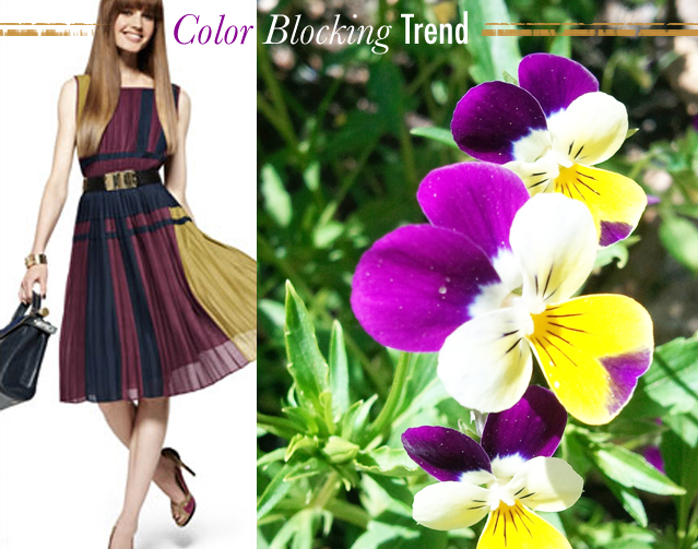 Colorblocking-by-Nature-Purple-Yellow
