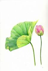 2012_09_08_lotus_01