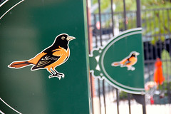 Oriole bird logo of Baltimore Orioles