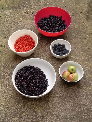 Hedgerow Fruits