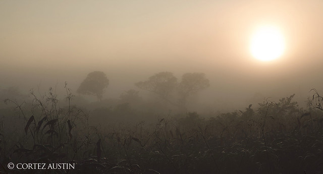 Pantanal_U1R1427