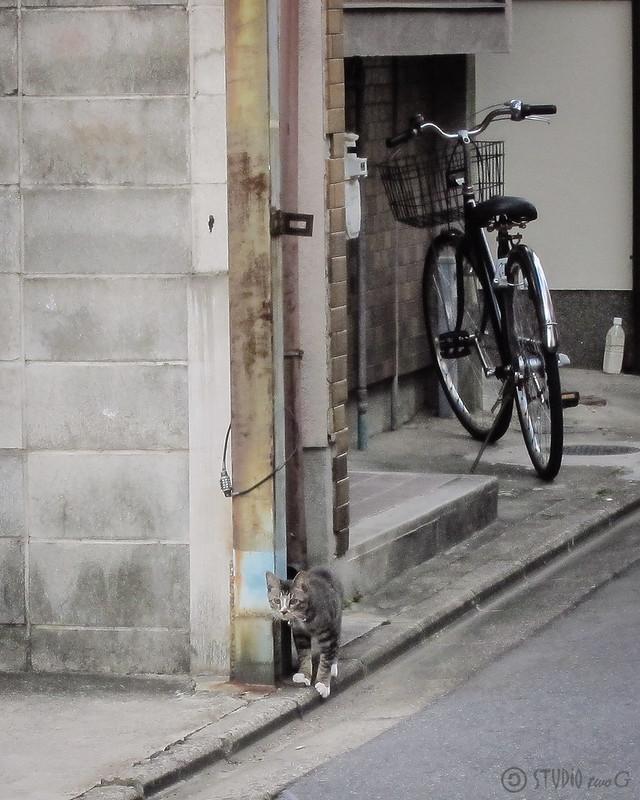 Today's Cat@2012-09-12