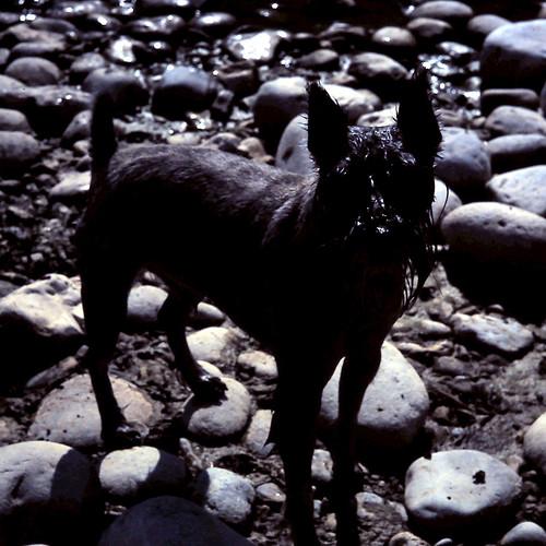Marée noire, Black Dog by andrefromont/fernandomort