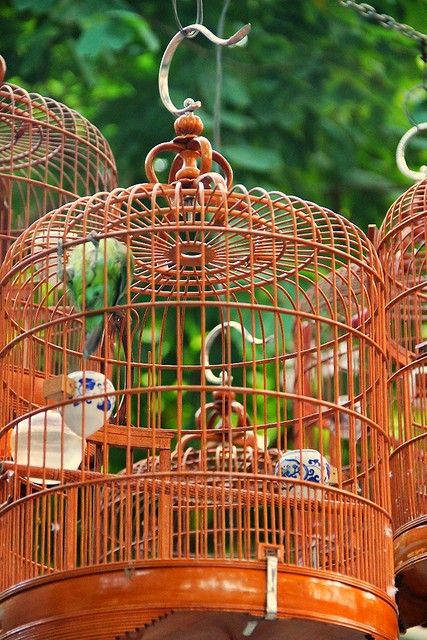 Bird Cage at Bird Street Hong Kong