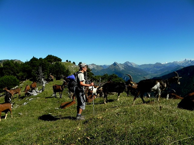 En compagnie des chèvres (3)