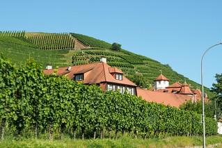 ドイツ、バーデンバーデン郊外のブドウ畑