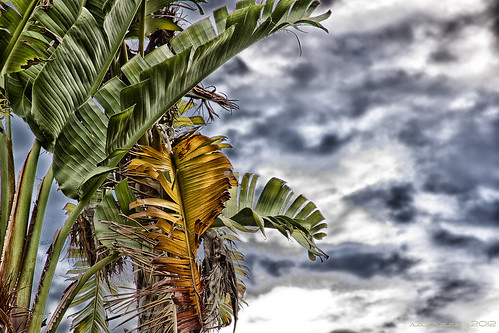 311/365 Tormenta tropical by sairacaz