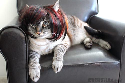 cat-wig-and-costume-practice