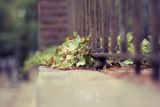 El Escorial se cubre de otoño