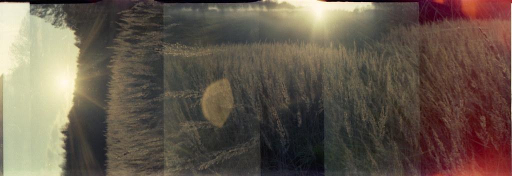 голоса травы