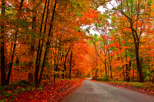 autumn color fall leaves country upstatenewyork countryroads