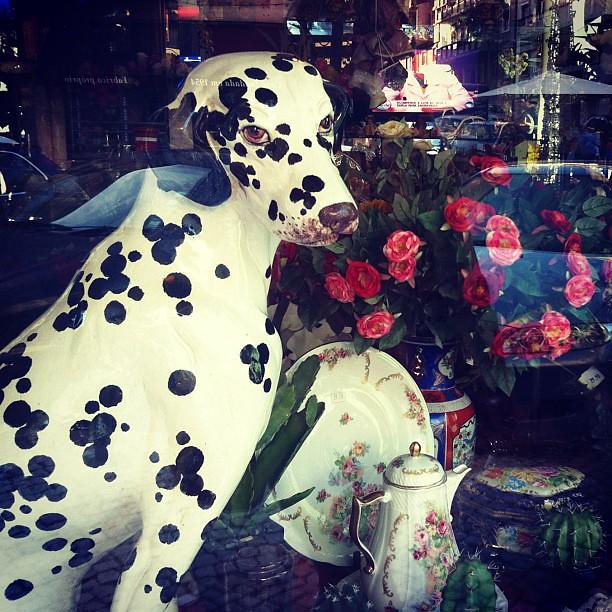 Cão de loiça #montrasdaminharua