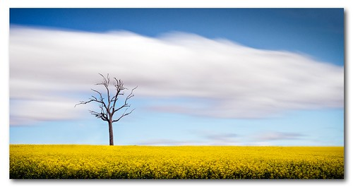 west tree field dead long exposure central nsw canola cowra nd110