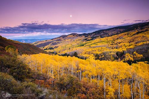 autumn mountain tree fall leave yellow colorado foliage aspen