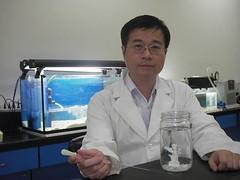 王志騰與薄荷腦處理後無共生藻的萼柱珊瑚(中央研究院生物多樣性中心提供)