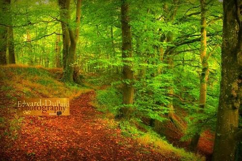 wood autumn kilkenny ireland fall nature forest landscape herbst eire otoño emeraldisle irlanda ierland autunna autommne edwarddullardphotographykilkennycityireland flickrstruereflectionlevel1 me2youphotographylevel1