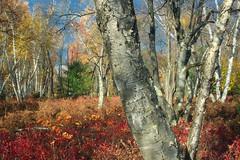 Marion Brooks Natural Area (3)