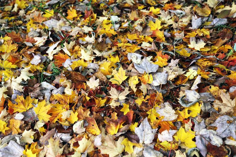 web_leafpile_foliage_0177