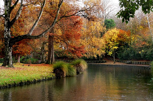 Hagley Park New Zealand. (29)