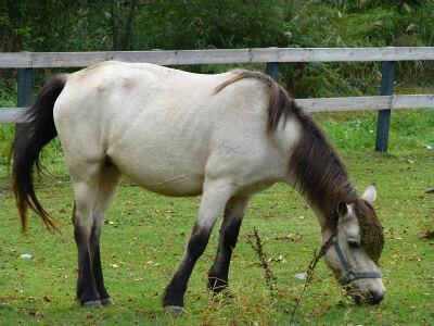 木曽馬^^