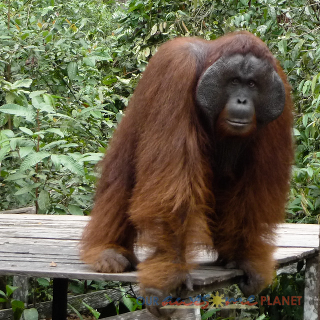 Orangutan World, Tanjung Puting Borneo Adventure-181.jpg