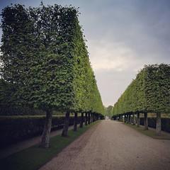 In Danimarca gli alberi crescono quadrati.