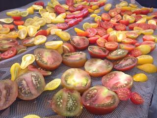 Tomato Drying #2