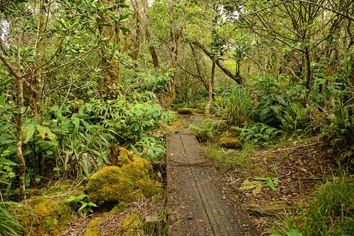 Day 1: Alakai Swamp Trail