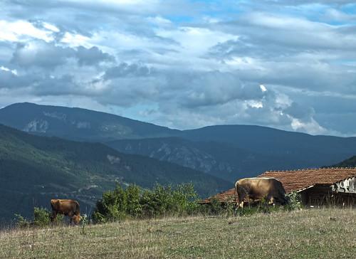 És persze találtunk teheneket is