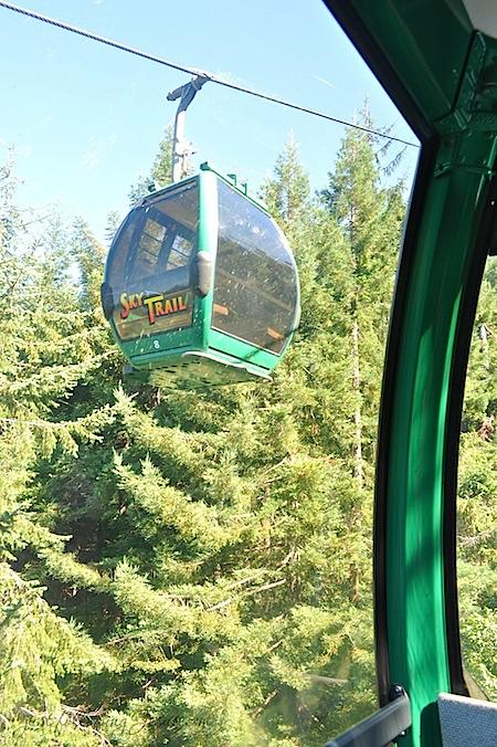 redwoods 3.jpg