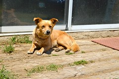 Tonto Camp Dog Posing