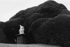 Zoe Lavoie-Gouin - She Stands Alone, Drummond Gardens