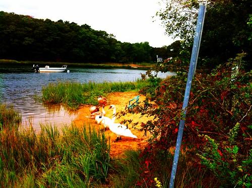 dog sunrise river running september 2012 assabetriver skywatch norwoods funballs