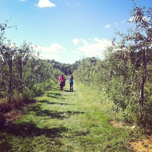 WPIR - orchard pony rides