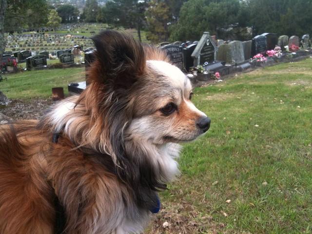 Canine contemplation?
