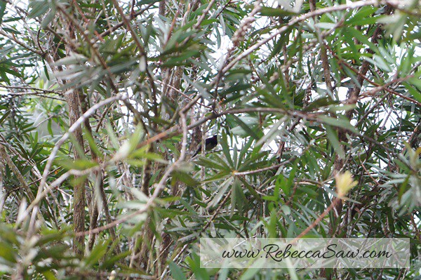 bird pic - fraser hill