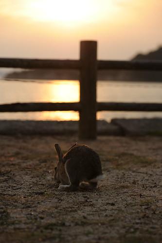 Okunoshima Island