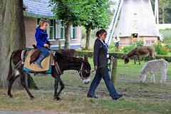 trail riding(0.0), horse(0.0), animal(1.0), donkey(1.0), mule(1.0), mare(1.0), pack animal(1.0),