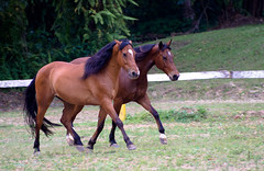 rein(0.0), endurance riding(0.0), halter(0.0), grazing(0.0), animal(1.0), mane(1.0), mare(1.0), stallion(1.0), colt(1.0), foal(1.0), pack animal(1.0), horse(1.0), fauna(1.0), horse grooming(1.0), mustang horse(1.0), meadow(1.0), pasture(1.0),