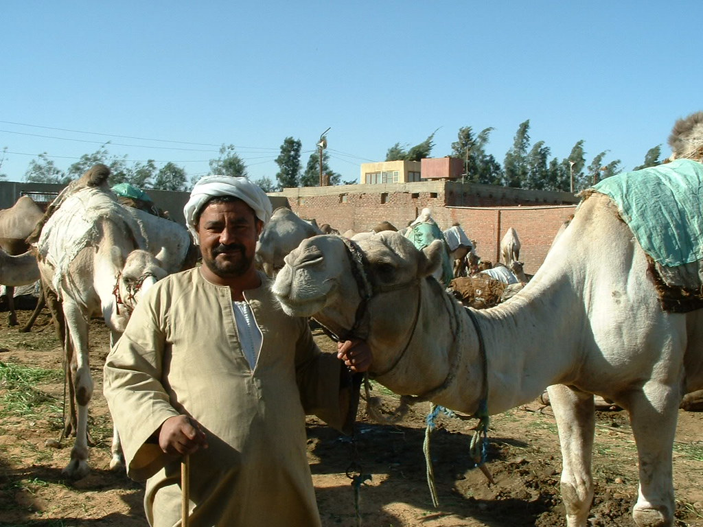 Camel Buyer Barqash Camel Market