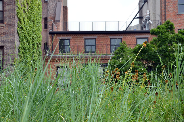 A tiny grassland sits on the roof of a Brooklyn Heights carriage house. Photo by Tara Thayer.