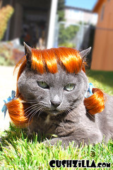 Red pig-tail wig on a pretty gray cat