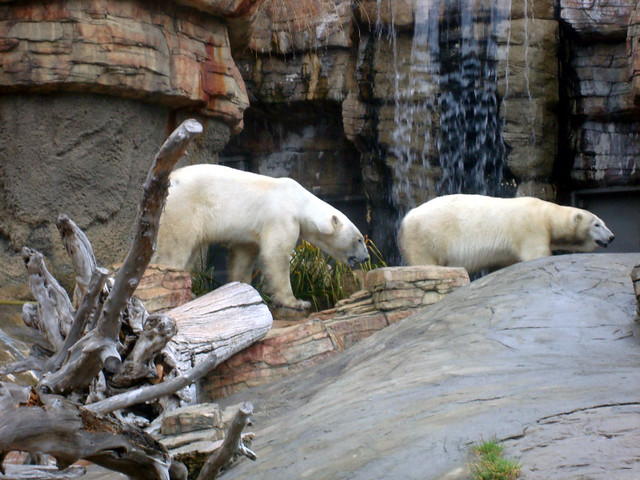 polar bears - cheap san diego zoo tickets