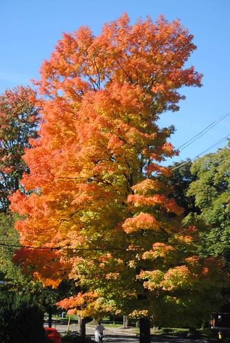 fall colours, through window