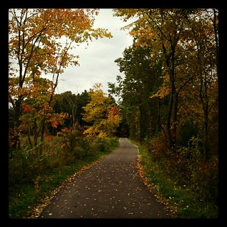 #fall in #newhampshire = #love #happy #leaves #leaf #tree #sky #trail #railtrail